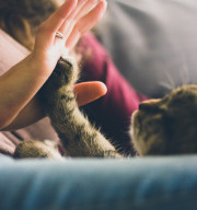 cat and hand